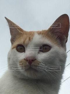 猫のクローズアップの写真・画像素材[3526329]