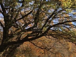 大きな木の写真・画像素材[3722036]
