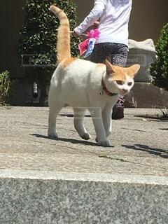 猫が歩いてくるの写真・画像素材[4183828]