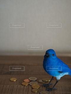 青い壁の上に座っている鳥の写真・画像素材[3493279]