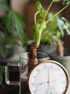 乾湿計と観葉植物の写真・画像素材[3507817]