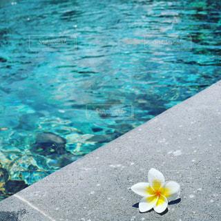 水面とプルメリアの写真・画像素材[3554580]