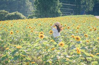 君の花の写真・画像素材[3567603]