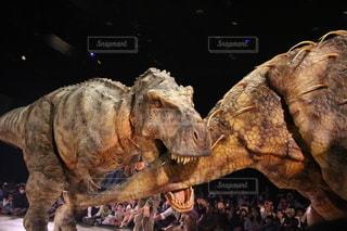ティラノサウルスとトリケラトプスの戦いの写真・画像素材[3411051]