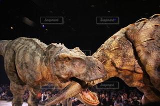 ティラノサウルスとトリケラトプスの戦いの写真・画像素材[3411050]