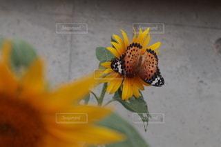 花のクローズアップの写真・画像素材[3457783]
