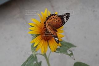 花のクローズアップの写真・画像素材[3457780]