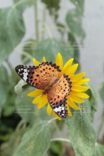 花のクローズアップの写真・画像素材[3457779]