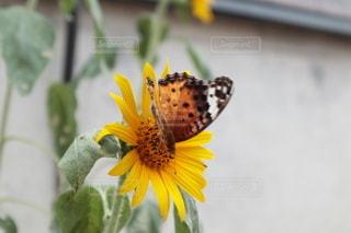 花のクローズアップの写真・画像素材[3457782]