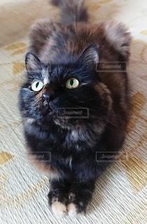 くつろぐ猫の写真・画像素材[3409491]