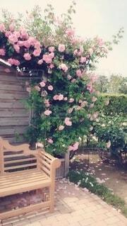 在りし日の薔薇園🌹の写真・画像素材[4352563]
