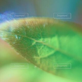 新緑の写真・画像素材[4408778]
