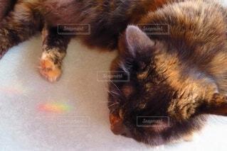 虹の光とすやすや眠る愛猫の写真・画像素材[4534924]