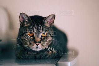 シックなカメラを見ている猫の写真・画像素材[3487641]