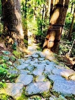 熊野古道の写真・画像素材[3630859]