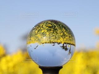菜の花畑がクリスタルボール中にの写真・画像素材[4221295]