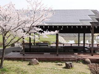 満開の桜と庭園の写真・画像素材[4336740]