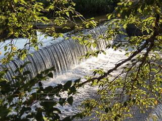 木陰からの川の写真・画像素材[4726045]