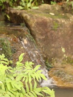 小さな滝の写真・画像素材[4726046]