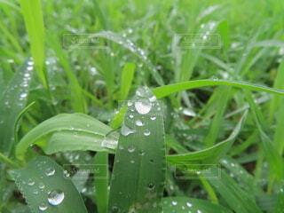 雨のしずくの写真・画像素材[4733604]
