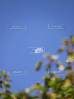 自然,風景,空,木,屋外,天体,青い空,星,樹木,月,半月