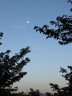 自然,風景,空,屋外,夕暮れ,夕方,樹木,月,満月,夕景,草木,針葉樹