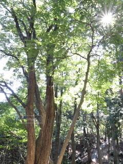 木漏れ日が綺麗の写真・画像素材[4930087]
