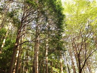 爽やかな森の中の写真・画像素材[4930088]