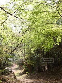森林浴を愉しみながら散策の写真・画像素材[4930091]