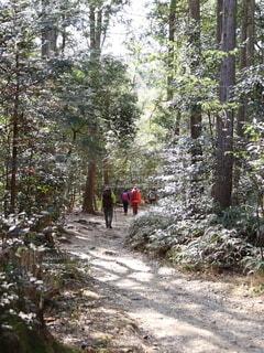 山歩きの写真・画像素材[4930092]