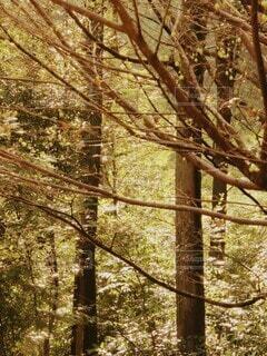 深い森の中の写真・画像素材[4932444]