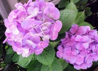 花のクローズアップの写真・画像素材[3417807]