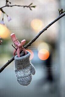 冬の忘れ物の写真・画像素材[4096847]
