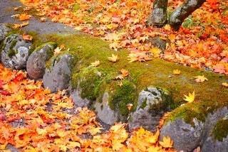 足元に秋の色の写真・画像素材[3724432]