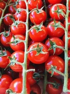 食べ物,野菜,ミニトマト,食品,プチトマト,食材,フレッシュ,ベジタブル,ブッシュトマト