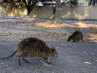 土の中に立っている猫の写真・画像素材[3447611]