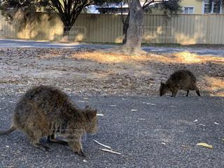 未舗装の道路を歩いている猫の写真・画像素材[3447610]