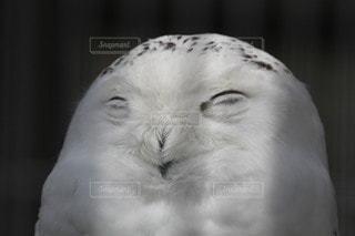 動物のクローズアップの写真・画像素材[3469530]