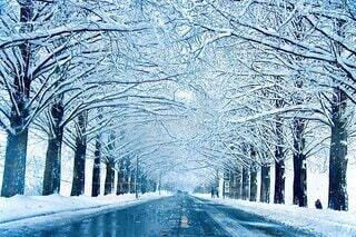 雪の並木の写真・画像素材[4195291]