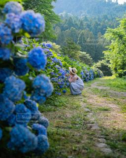 紫陽花と休日の写真・画像素材[3430573]