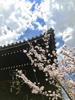 自然,空,桜,京都,雲,長岡京市,光明寺