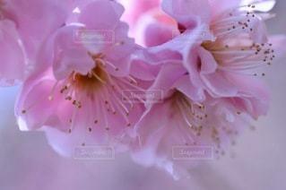 花のクローズアップの写真・画像素材[3527838]