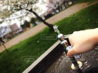 自然,風景,公園,桜,木,屋外,緑,水,草,手持ち,蛇口,人物,人,水道,ポートレート,ライフスタイル,近所,手元