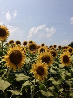 花のクローズアップの写真・画像素材[3492999]
