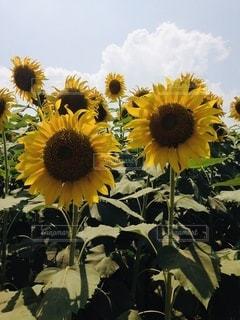 花のクローズアップの写真・画像素材[3493001]