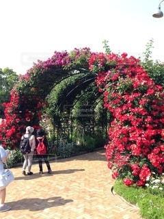 薔薇のアーチの写真・画像素材[3575403]