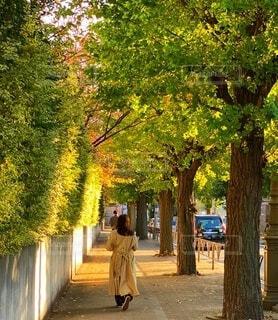 銀杏並木を歩く女性の写真・画像素材[3896968]