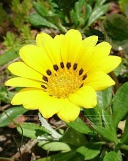1輪の花の写真・画像素材[3585458]