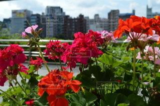 都会に咲く花の写真・画像素材[3504676]