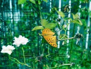 花と蝶々の写真・画像素材[3507226]